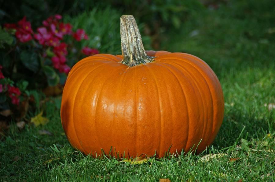 pumpkin skin